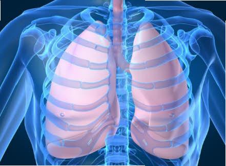10 Remedios caseros para la bronquitis