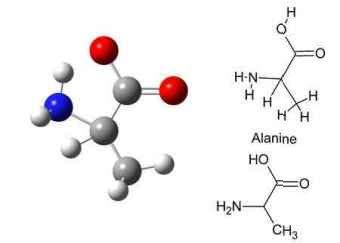 aminoacidos en el cuerpo humano