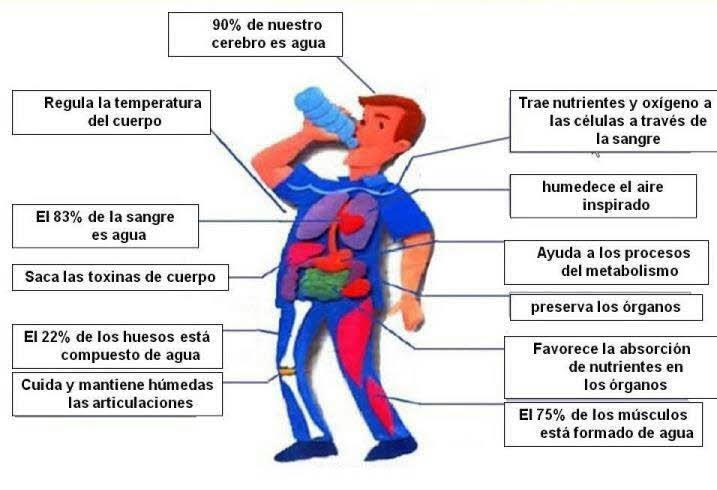 porque es tan importante beber agua