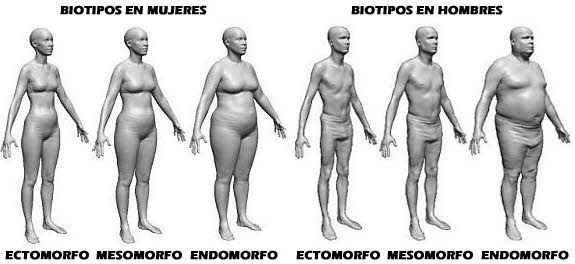 biotipos hombre y mujer