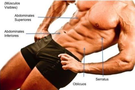 musculos-de-las-abs