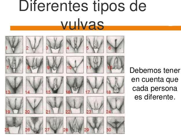 Diferentes tipos de vaginas