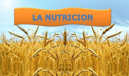 La importancia global nutricion