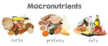 Nutrientes esenciales macronutrientes